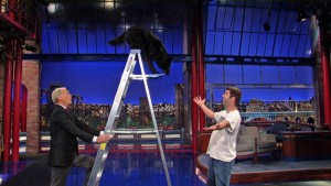 Stupid Pet Tricks: A dog on a ladder. (Daily Motion)